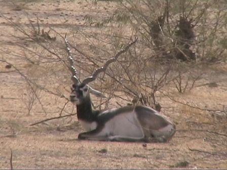 Un animal rare au rajasthan un &;hybride&; tête de cheval - corps de